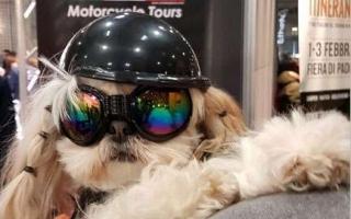 2019-01-motorbike-expo-03