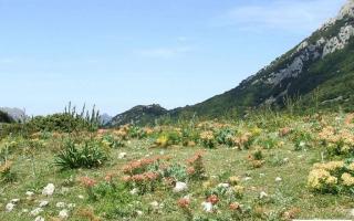 Sicilia: Maggio 2012