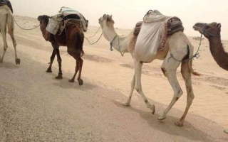 viaggio-in-tunisia-2014-04